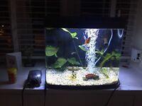 Fish tank interpet river reef 48 led