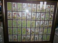 John Player Cigarette Cards Set of 50