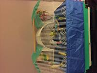4 budgies and cage.