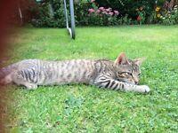 Lost kitten Aylsham
