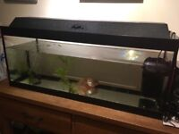 FISH TANK LARGE vgc with pump and air applications