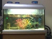 Fish tank and/or fish