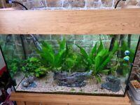 AquaOne OakStyle 145 Aquarium and Cabinet in fantastic condition