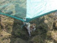 large outdoor pet playpen