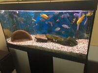 Fish tank full setup with the fish Malawi .