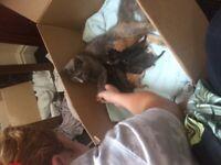 Beautiful kittens 4 left :)