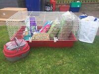 Guinea pig cage plus extras