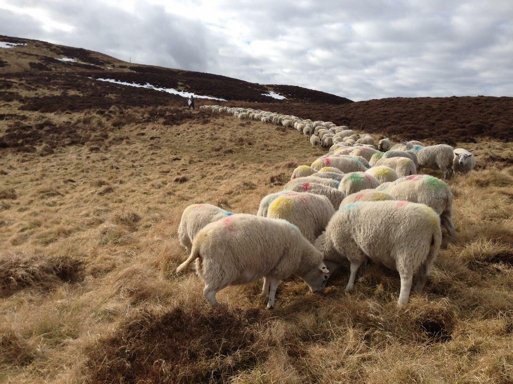 Rough Grazing Wanted- Perthshire or Angus