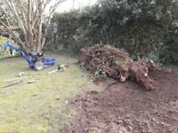 stump grinding and stump removal landscaping mini digger