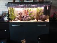 Fishtank & unit