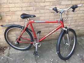 Bike - male adult