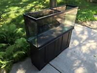 50 Gallon tank with black stand $60
