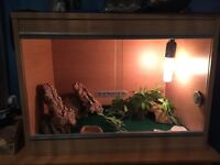 Two Sunburst Geckos with Vivarium & Accessories