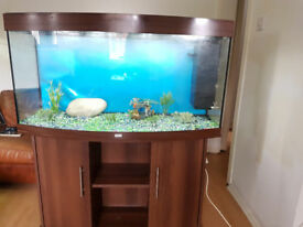 BOW FRONTED 280 LITER FISH TANK AND STAND FOR SALE