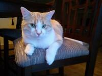 LOST/STOLEN BEAUTIFUL CAT - WE MISS HIM VERY MUCH!
