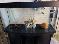 4ft bow fronted fish tank and Stand For Sale full set up