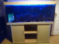5FT Fish tank and stand