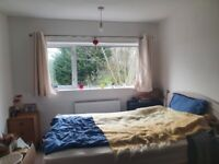 Clean, relaxed housemate wanted in lovely unfurnished double room