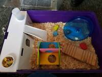 Dwarf hamsters and set up