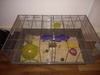 7 month old Syrian hamster with cage and accessories costing £150