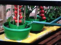 PLANT HALOS - BOX OF 3 BRAND NEW