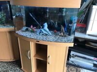 180l Juwel bow front fish tank f set up with stand fluval 304 external filter heater 2 x lid light