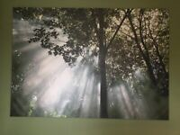 Large Ikea canvas print - Forest/ Jungle scene (200cm x 140mm)