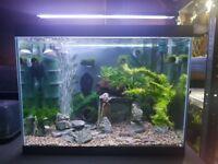 Fish tank 80 liters
