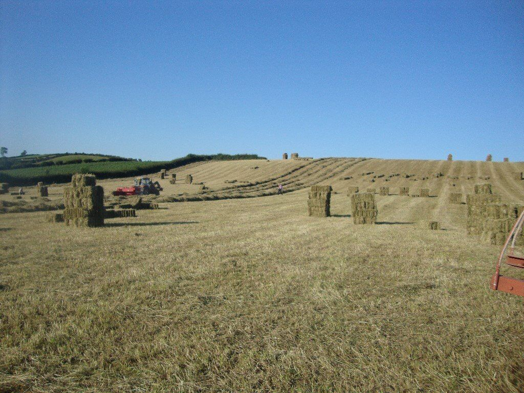 Hay, haylage, straw, silage