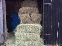 Small hay bales for sale.