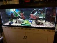 4 ft fish tank complete set up