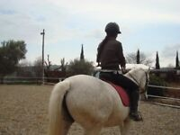 Horse riding lessons / hacking wanted in exchange for babysitting or some other help.