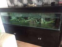 Fishtank on cabinet