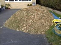 FREE: Wood chippings