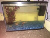 24l tank with fish