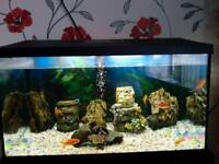 2ft tank, stand & 8 cold water fish
