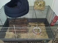 Quinea Rabbit Rat Pets Cage with extras