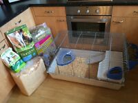 Two 14 week old male dwarf rabbits and inside hutch for sale