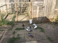 birds for sale inbournemouth