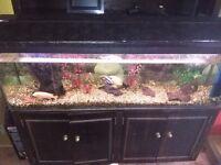 Aquarium complete with fish and pump etc