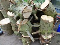 Large collection of Logs for Sale as per photographs