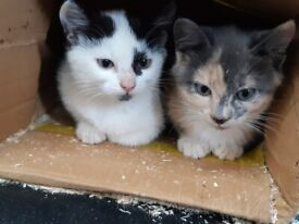 kittens for sale. SORRY ALL ARE SOLD NOW.