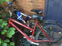 lady mountain bikes