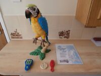 Hasbro Furreal Friends Squawkers MCcaw Electronic Talking Parrot