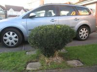 Box bush/shrub for sale in Severn Beach, Bristol, BS35 4NP - only £1.00!