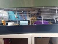 indoor rabbit and hutch for sale