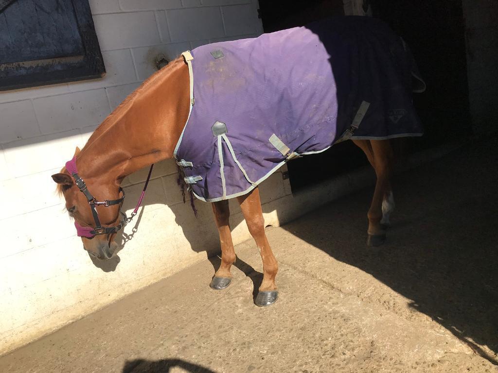 Horse Rug In Newmarket Suffolk Gumtree