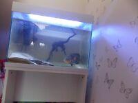 Jewel 90L fish tank and accessories.