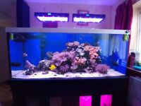 Fishes for sale in East Sussex - Gumtree