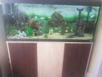 4ft Fluval fish tank